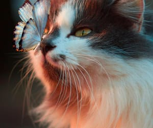 animals, butterfly, and cat image
