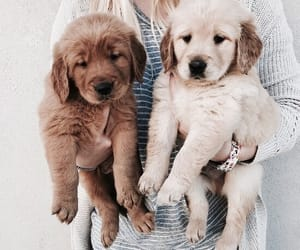 animal, puppy, and sweet image