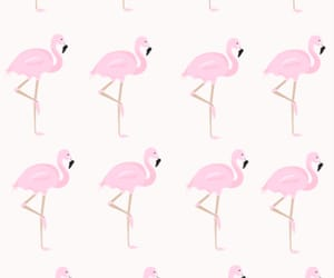 background, flamingos, and pink image