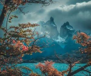 arbol, autumn, and belleza image