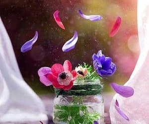 inspiracion, brisa, and petalos image