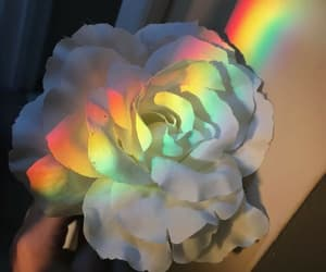 rainbow, flowers, and white image