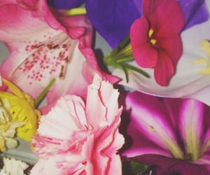 flowers, violette, and pink image