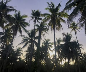 beach, coconut trees, and palm trees image