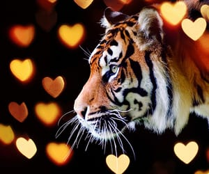 asia, feline, and hearts image