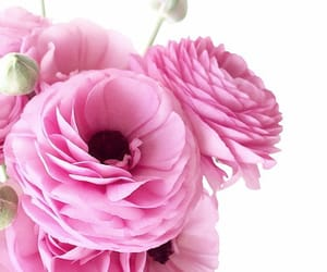 floral, pink bouquet, and flowers image