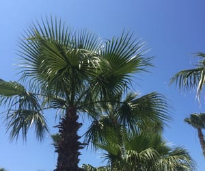 holiday, palm trees, and vibes image