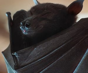 bat, sleeping, and sweet image