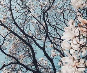 blossom, nature, and wallpaper image