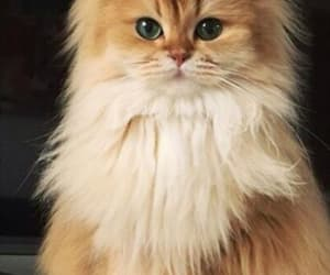 animal, cat, and cute kitten image