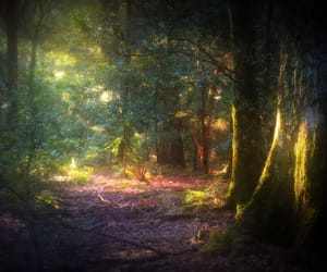 fairy tale, magical, and forest image