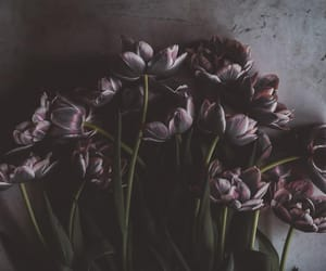 dark, flowers, and hd image