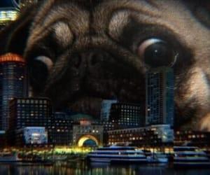 aesthetic, theme, and dog image