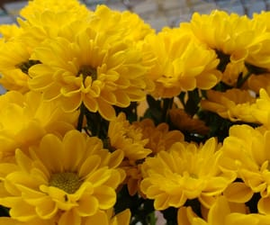 amarelo, flower, and yellow image