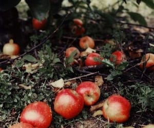 apple, red, and autumn image