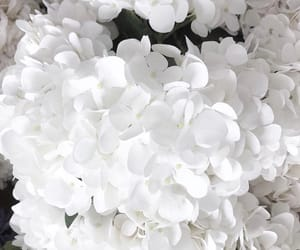 flowers, beauty, and white image