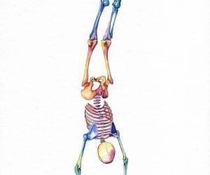 colores, sistema, and huesos image