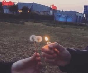aesthetic, burn, and dandelion image