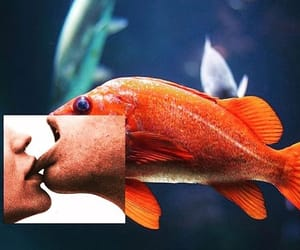 fish, aesthetic, and alternative image