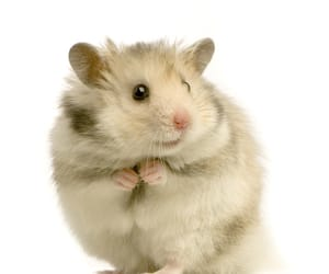 animals and hamster image