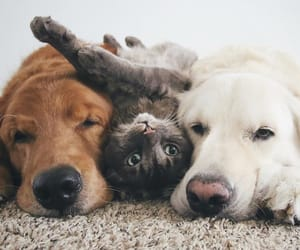 animal, dog, and friendship image