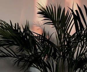 light, palm, and plants image