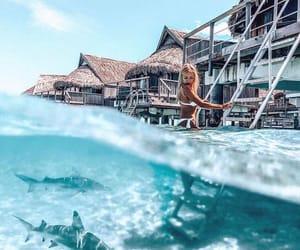 summer, blue, and Maldives image