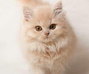 cat, kitty, and beautiful image