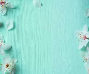 flowers, image, and wallpaper image