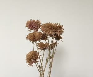 dried flowers and flower image
