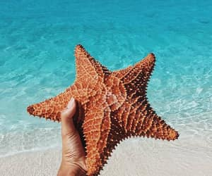 summer, sea, and starfish image
