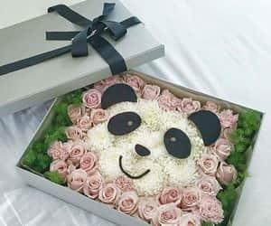 panda and regalo image