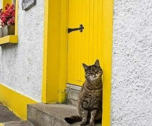 yellow, cat, and door image