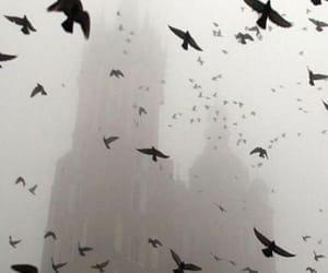 birds, dark, and photography image
