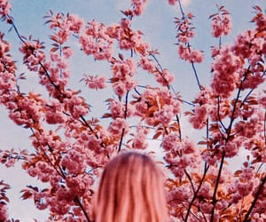 blossom, girl, and hair image