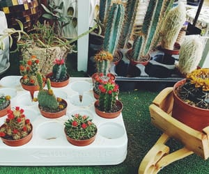cactus, Fleurs, and nature image