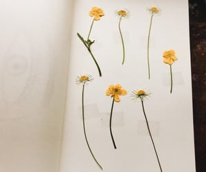 book, flowers, and pretty image