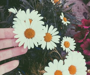 aesthetic, flowers, and edit image