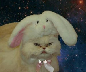 angry, bunny, and cat image