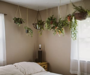 plants, house, and bedroom image