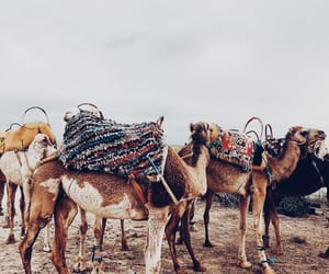camels, places, and sand image