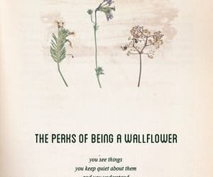 quotes, wallflower, and flowers image