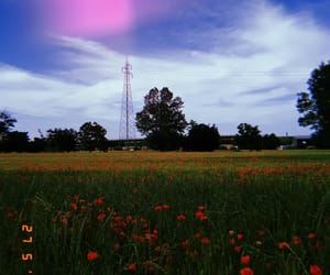 field, field of poppies, and flowers image