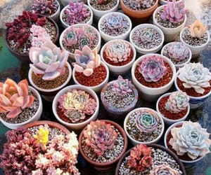 aesthetic, cactus, and inspiration image