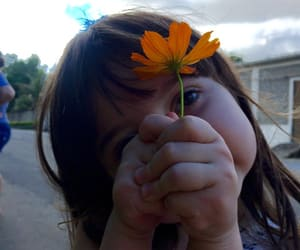 lovely, flower, and cute image