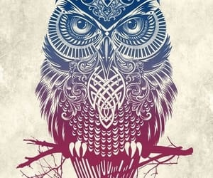 blue, colorful, and owl image
