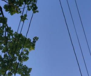 sky tree pretty outdoors image
