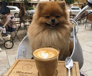 dog, animal, and coffee image