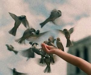 bird, nature, and vintage image