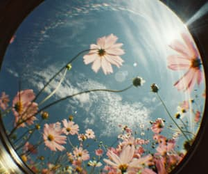 flowers, sky, and photography image